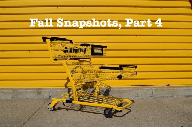 fall snapshots